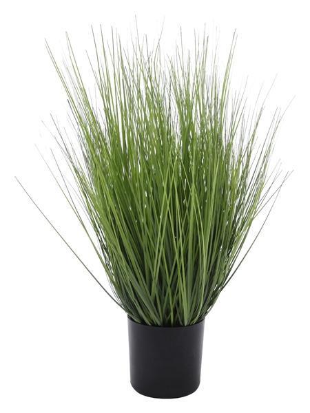 Exner King Festuca groß Gras (86cm)